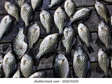 crappies pan-fish on an outside table make a fishing background
