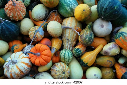 Crate full of pumpkin gourds at a local farm