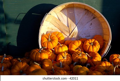 Crate full of pumpkins at a local farm