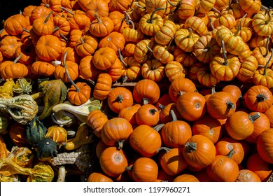 Crate of little organic pumpkins and gourds at a fall festival