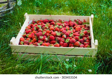Crate of red strawberry