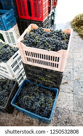 Crates with red grape in a winery