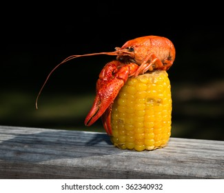 Crawfish Atop Corn Cob, 1