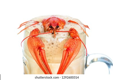 crawfish with beer isolated on white background. Beer brewery concept. Beer background