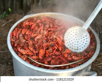 Crawfish boil put totally full and ready to eat. Cajun good time