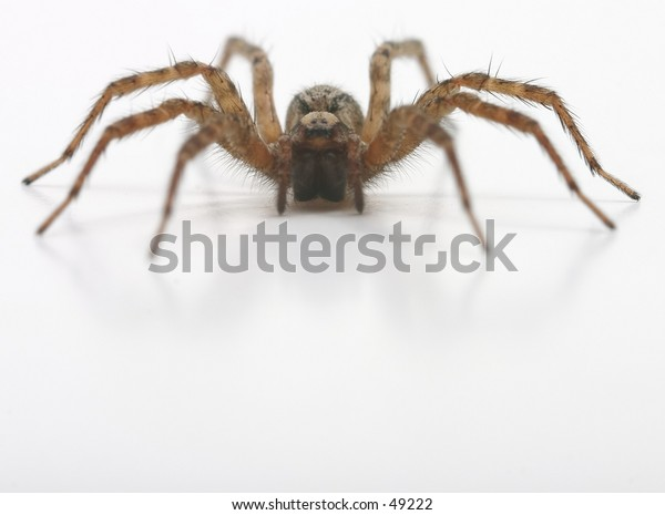 A crawling hairy spider
