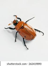 June Bugs Images, Stock Photos & Vectors | Shutterstock
