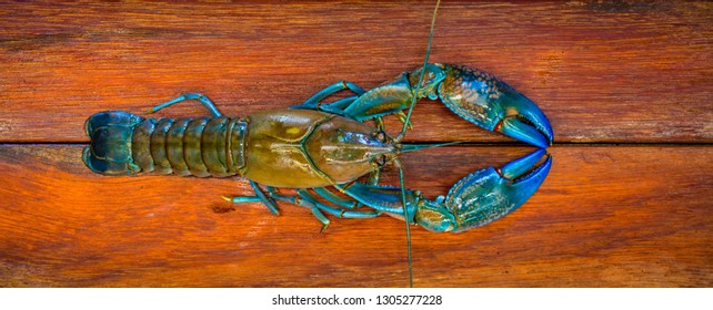 A crayfish also known as a (yabbie) with blue claws on a wooden chopping board ready to be prepared and cooked for dinner