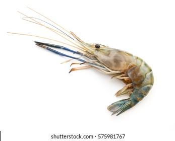 crayfish on white background.