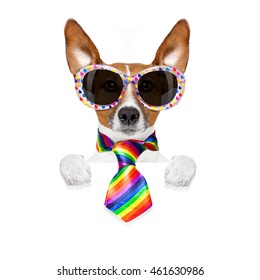 crazy funny gay dog proud of human rights , with rainbow flag and sunglasses, isolated on white background, behind blank banner or placard