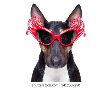 crazy funny gay pitbull dog proud of human rights ,sitting and waiting, with rainbow flag tie  and sunglasses , isolated on white background