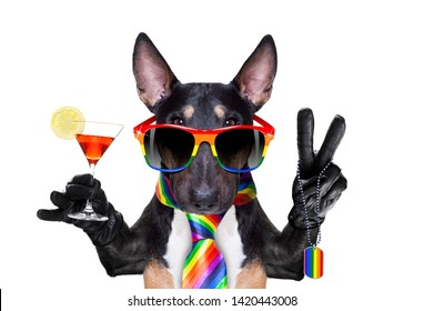 crazy funny gay pitbull dog proud of human rights ,sitting and waiting, with rainbow flag tie  and sunglasses , cheers with cocktail a toast