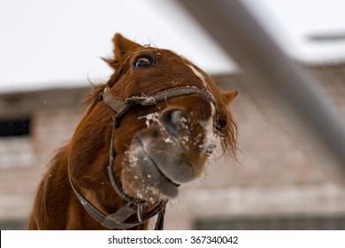 Crazy horse's head