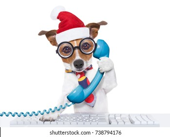 crazy jack russell dog with nerd glasses as an office business worker on the phone or telephone, isolated on white background, on christmas holidays vacation with santa claus hat