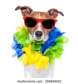crazy silly brazilian dog with red sunglasses and flower chain