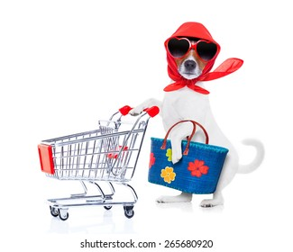 crazy and silly  jack russell dog diva lady with bag pushing  empty supermarket cart , isolated on white background