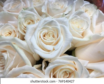 Cream colored roses