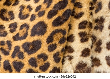 Crease tiger hair closeup for background user