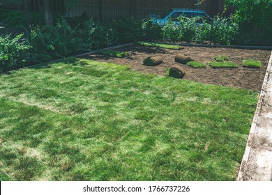 Creating a beautiful green lawn from a rolled lawn. The process of laying the finished fresh lawn rolls on the ground. Rolling a lawn in sunny weather in the backyard.