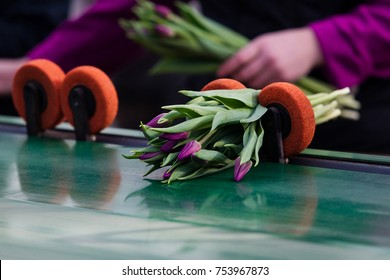Creation of a bouquet of tulips. Colorful tulips on conveyor. Flower plants cultivation in greenhouse