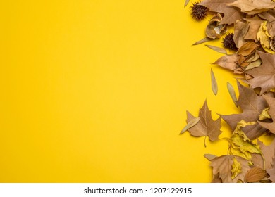 Creative Autumn layout. Dried leaves on yellow background. Border arrangement. Fla