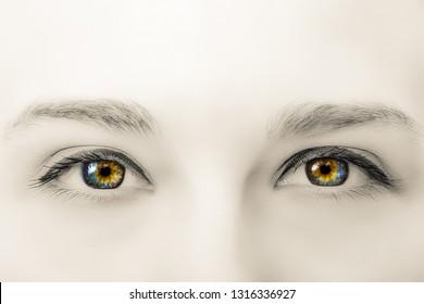 Creative black and white photo of colorful female eyes with long eyelashes and professional make-up close-up macro
