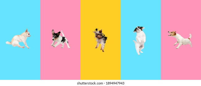 Creative collage of five different breeds of dogs. Flyer for ad.