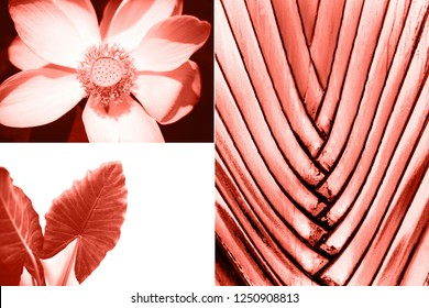 Creative collage in Living Coral color. Main trend concept. Natural and authentic mood.