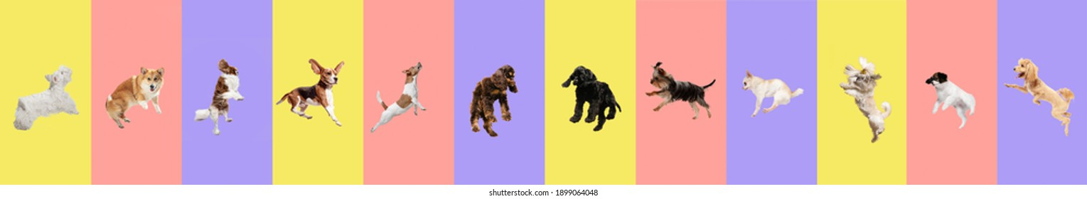 Creative collage. Purebred dogs jumping isolated over gradient background.