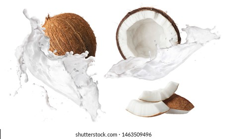 Creative Collection set with Flying in air fresh ripe whole and cracked coconut with milk splashes  isolated on white background. Food levitation concept. High resolution image, 3d concept