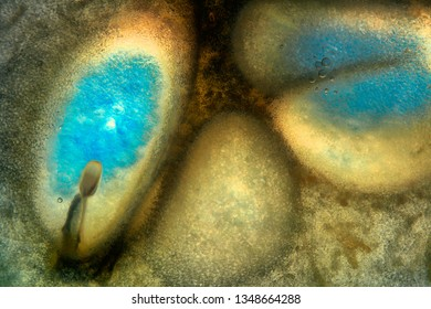 Creative, colorful macro image of fruity pulp. Abstract, fresh, fruity background with enhanced texture, fibers and seeds.