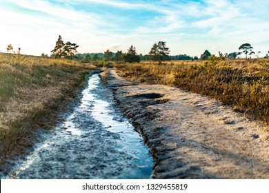 Creative colour landscape photograph of a wet track within a heathland nature reserve on a sunny evening taken with selective focus. Canford heath reserve, Poole, Dorset, England.