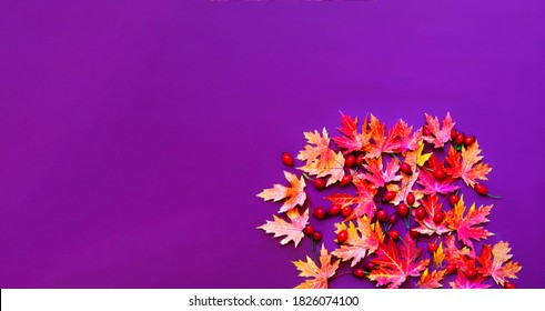 Creative composition of colorful autumn leaves and rose hip. Biophilia design. Autumn purple background.