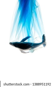 Creative concept advertising for campaign save oceans from plastic pollution by photo of whale model struck in blue plastic bag with copy space. Plastic looks transparent from studio flash light.