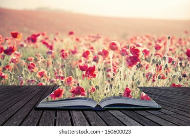 Creative concept pages of book Beautiful landscape image of Summer poppy field under stunning sunset sky with cross processed retro effect