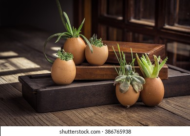 Creative DIY. Plant Succulents in Eggshells and vintage wooden boxes. Easter boho Easter party favor