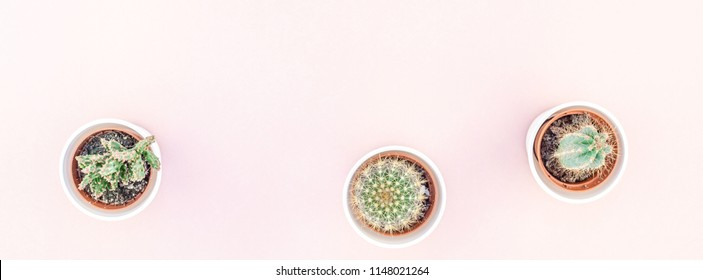 Creative flat lay overhead top view small pots with decorative cactuses plants with copy space on millennial pink paper background in minimalism style. Long wide banner for feminine blog, social media