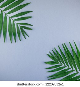Creative flat lay top view of green tropical palm leaves on blue grey paper background with copy space. Minimal tropical palm leaf plants summer square concept template for your text or design