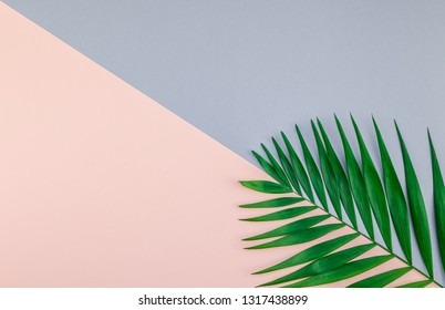 Creative flat lay top view of green tropical palm leaves on color paper background with copy space. Minimal tropical palm leaf plants summer concept template for your text or design