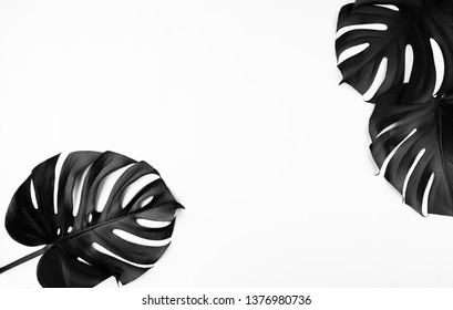 Creative floral layout of tropical monstera leaves spray painted in black on plain white background. Empty space, room for text, copy. Minimalist style trendy fashion concept.