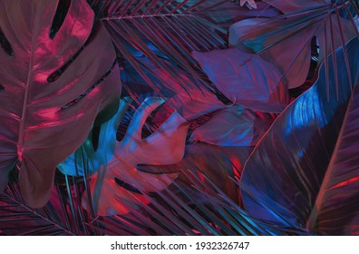 Creative fluorescent color tropical  leaves layout. Purple and blue neon light flat lay. Nature concept.