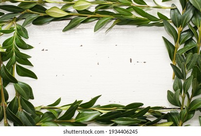 Creative frame border with Bunch of Greenery Boxwood Twigs on white wooden rustic background. Copy space for text. Nature, Vintage, retro concept.