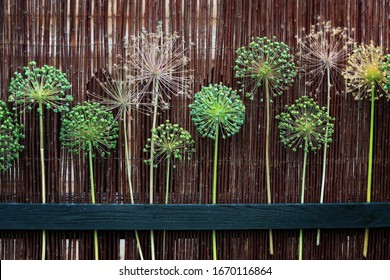 Creative garden art made out of Allium seeds on a circular stem being stuck on a Willow fence