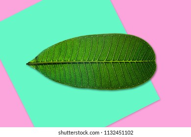 Creative green leave on colorful background. Minimal art design.