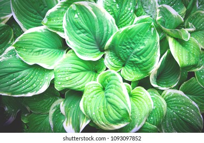 Creative green leaves layout. Nature concept, flat lay.