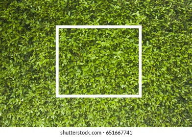 Creative greenery leaves background with bank white note