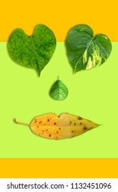 Creative heart shape leaves on colorful background. Minimal art design.