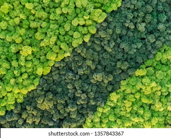 creative idea for background of green stabilized moss