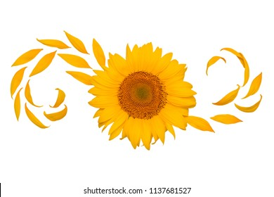 Creative idea flower of a sunflower and petals flying in the wind. Abstraction and wave. Agricultural topics. Place for text. Flat lay, top view