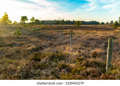 Creative landscape photograph of heathland reserve with line of posts from historic grazing fence without wire. Taken on a sunny evening on Canford heath nature reserve, Poole, Dorset, England.